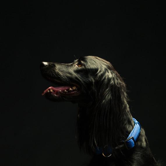 HundeforFoto-0000820